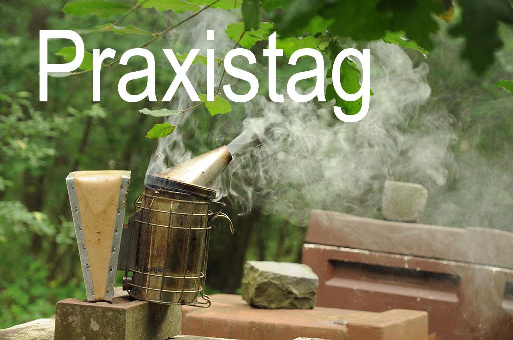 Praxisnahes Imkern in Marl, Dorsten, Haltern und dem ganzen Vest Recklinghausen